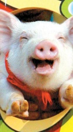 돼지꿈 꾸고 복 많이 받으세여~ ㅋ