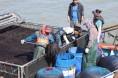 해남군, 2020년산 고품질 물김 생산 '돌입'