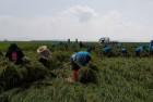 한국농어촌공사 해남·완도지사, 농촌일손돕기 봉사활동 실시