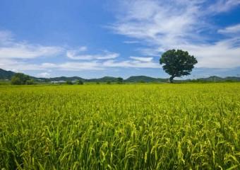 해남군, 친환경 농업 1번지 위상 지킨다